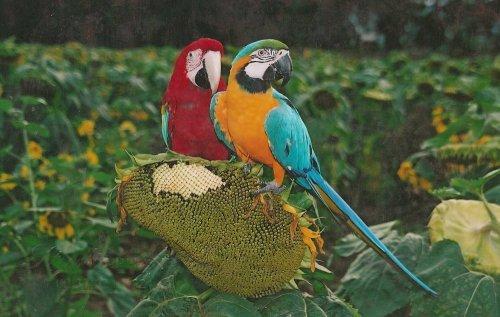 Photographe mariage - PHAN Georges - photo 140