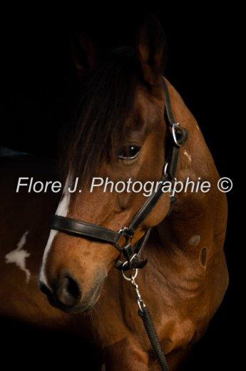 Photographe mariage - Flore Janvier - photo 14