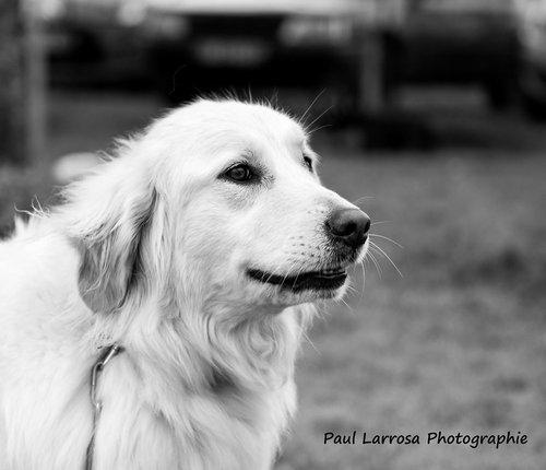 Photographe mariage - Paul Larrosa Photographie - photo 25