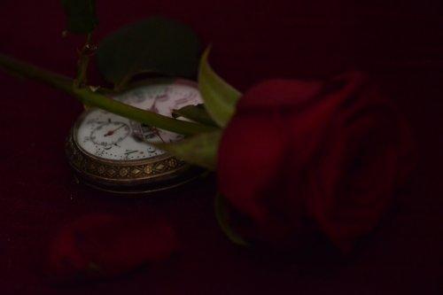 Photographe mariage - vincent roques - photo 14