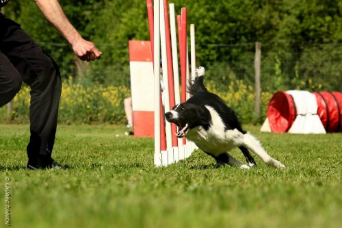 Photographe mariage - Damien.L (D2LPHOTO) - photo 15
