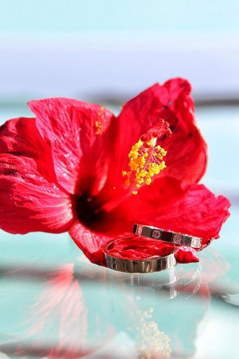 Photographe mariage - Merci pour votre confiance !  - photo 24