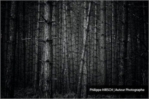 Photographe mariage - Philippe HIRSCH ⎢ Photographe - photo 34