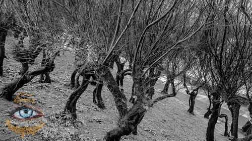 Photographe - Lionel Gams Photographie - photo 73