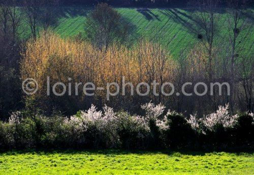 Photographe - Bopdy Philippe - photo 75