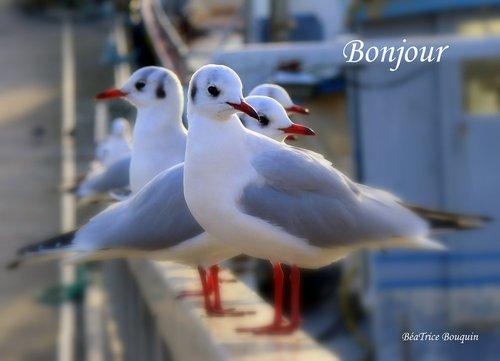 Photographe mariage - Béatrice Bouquin - photo 29
