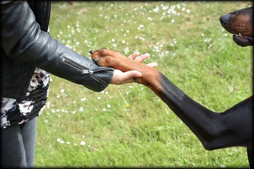Photographe mariage - Plaisir Photo - photo 25