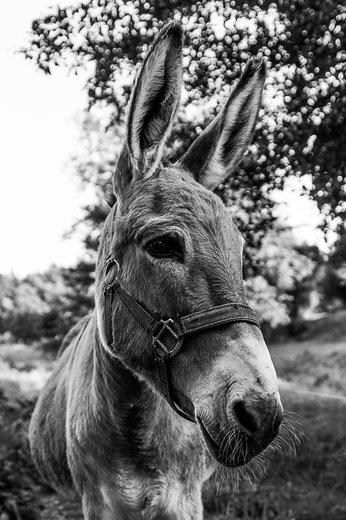 Photographe - TRICART LUDOVIC - photo 6