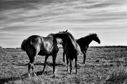 Photographe - TRICART LUDOVIC - photo 10