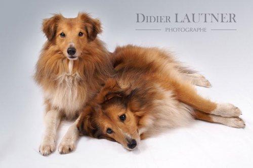 Photographe mariage - Photographe Didier LAUTNER - photo 25