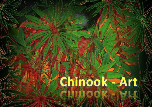 Photographe - Chinook-Art - photo 35