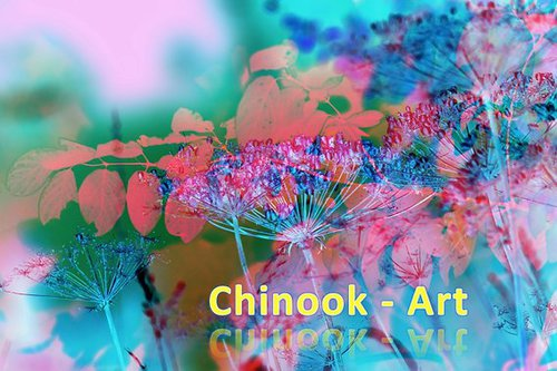Photographe - Chinook-Art - photo 50