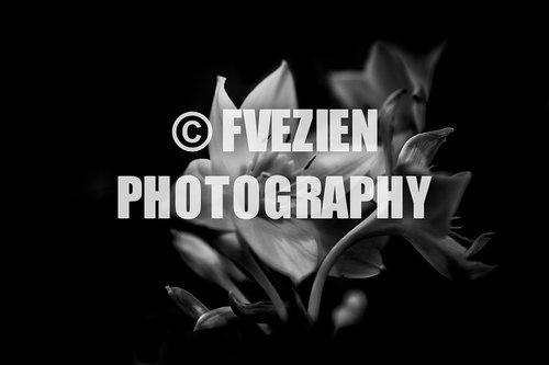 Photographe mariage - François Vézien PHOTOGRAPHE - photo 57