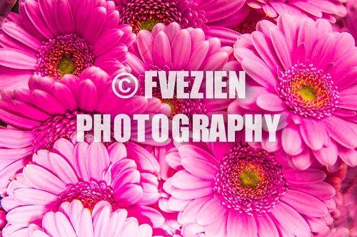 Photographe mariage - François Vézien PHOTOGRAPHE - photo 28