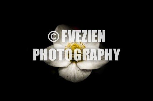 Photographe mariage - François Vézien PHOTOGRAPHE - photo 54