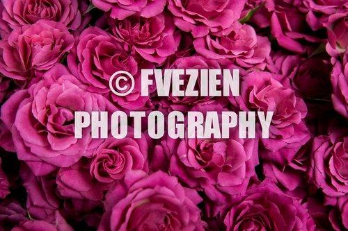Photographe mariage - François Vézien PHOTOGRAPHE - photo 11