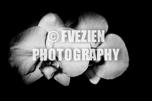 Photographe mariage - François Vézien PHOTOGRAPHE - photo 35