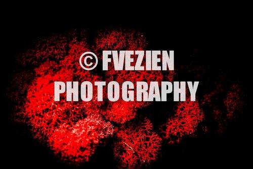 Photographe mariage - François Vézien PHOTOGRAPHE - photo 22