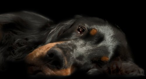 Photographe - Animal Studio - photo 7