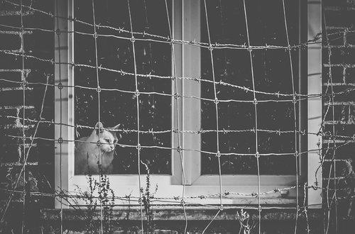 Photographe - Dumouchel Delphine - photo 1