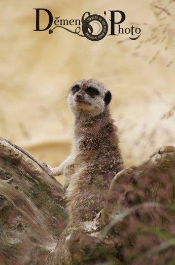 Photographe - Perrine, Photographe animalier - photo 7