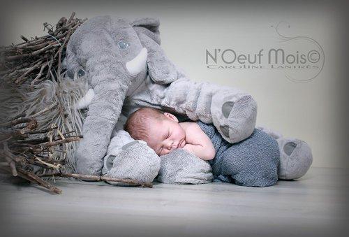 Photographe - N'Oeuf Mois  - photo 2