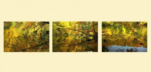 Photographe - Auteur Photographe             - photo 11