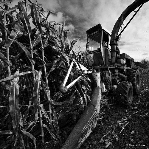 Photographe - Thierry HOUYEL - photo 118