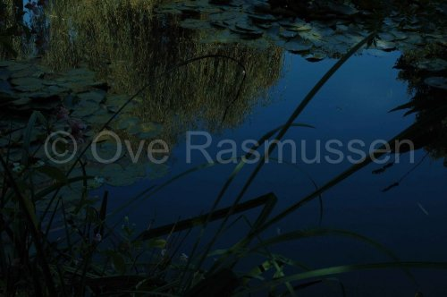 Photographe - ove rasmussen - photo 33